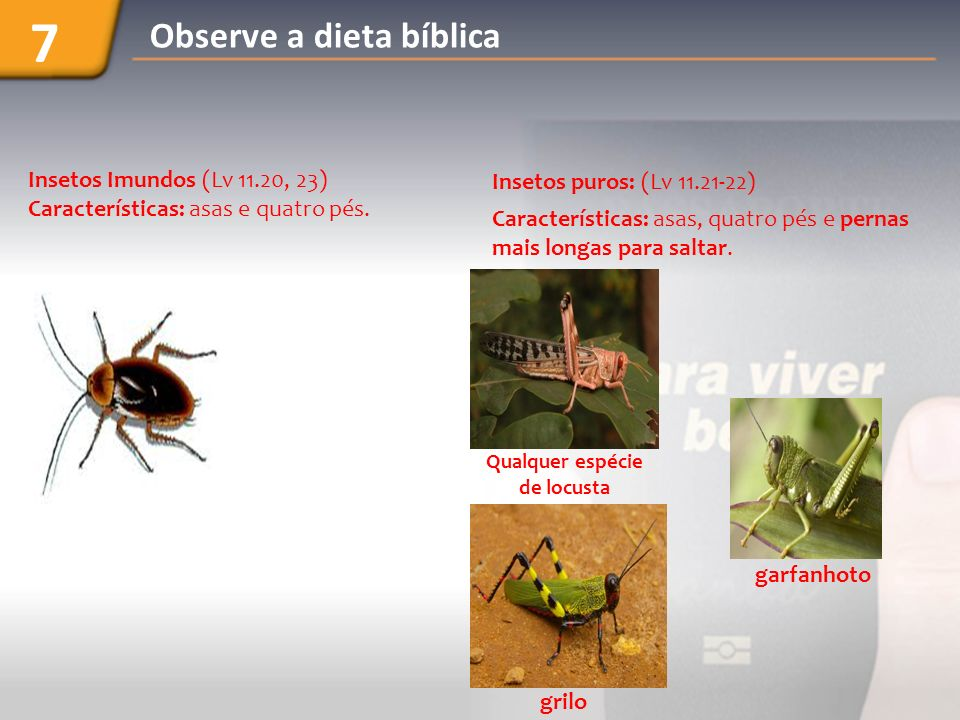 Insetos puros: (Lv 11.21-22) Características: asas, quatro pés e pernas mais longas para saltar. Insetos Imundos (Lv 11.20, 23) Características: asas