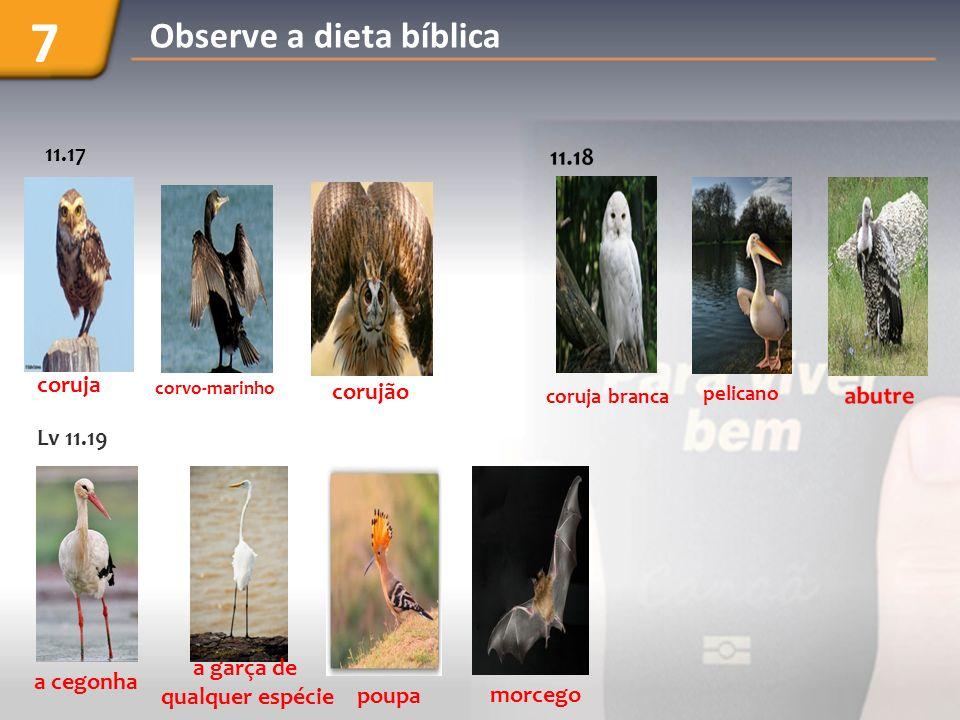 Lv 11.19 a cegonha a garça de qualquer espécie poupa morcego coruja branca pelicano 11.17 coruja corvo-marinho corujão Observe a dieta bíblica 7