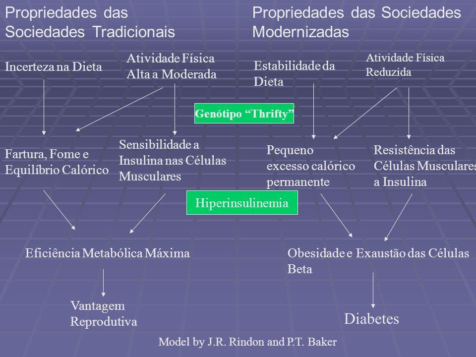 Propriedades das Sociedades Tradicionais Propriedades das Sociedades Modernizadas Incerteza na Dieta Atividade Física Alta a Moderada Genótipo Thrifty