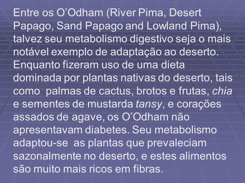Entre os OOdham (River Pima, Desert Papago, Sand Papago and Lowland Pima), talvez seu metabolismo digestivo seja o mais notável exemplo de adaptação a