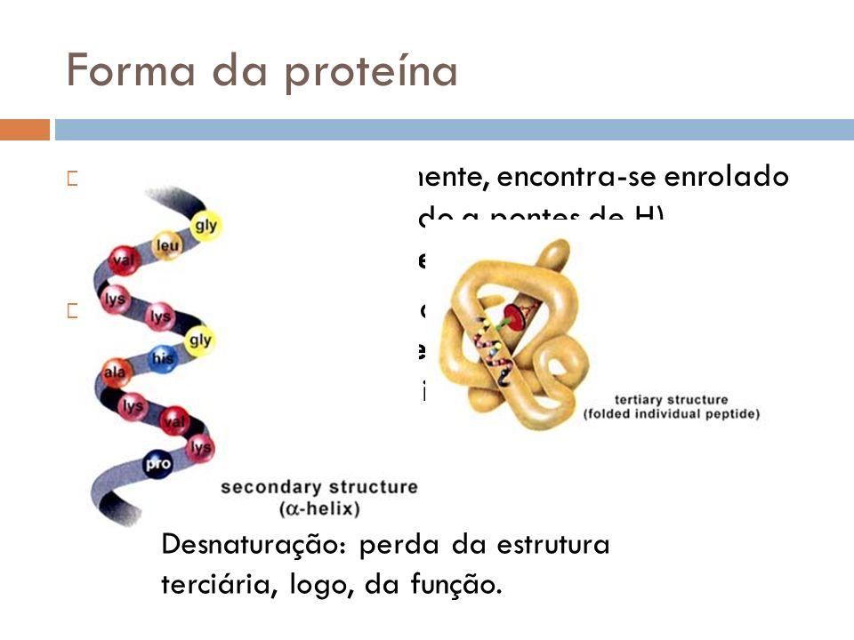 Forma da proteína O fio proteico, normalmente, encontra-se enrolado (forma de hélice – devido a pontes de H), formando a estrutura secundária da prote