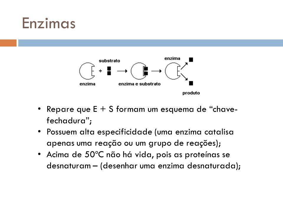 Enzimas Repare que E + S formam um esquema de chave- fechadura; Possuem alta especificidade (uma enzima catalisa apenas uma reação ou um grupo de reaç