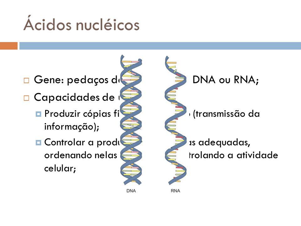 Ácidos nucléicos Gene: pedaços de moléculas de DNA ou RNA; Capacidades de um gene: Produzir cópias fiéis de si próprio (transmissão da informação); Co
