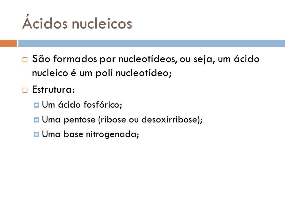Ácidos nucleicos São formados por nucleotídeos, ou seja, um ácido nucleico é um poli nucleotídeo; Estrutura: Um ácido fosfórico; Uma pentose (ribose o