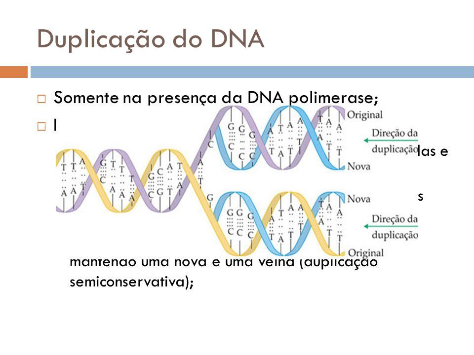 Duplicação do DNA Somente na presença da DNA polimerase; Etapas: As pontes de H das bases nitrogenadas são rompidas e os filamentos afastam-se; Nucleo