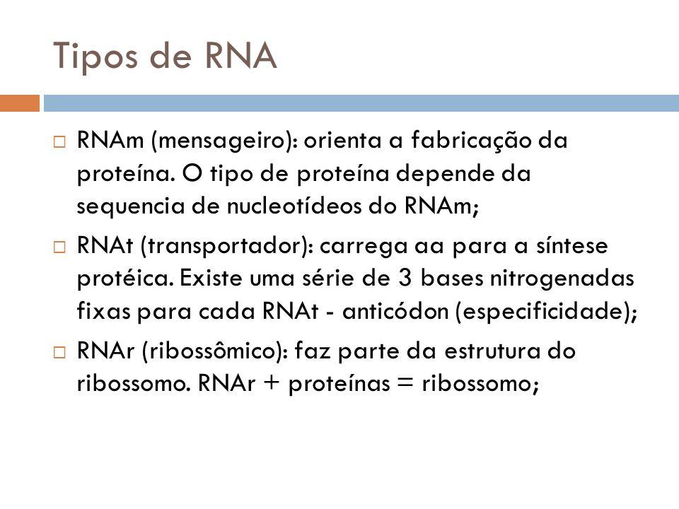Tipos de RNA RNAm (mensageiro): orienta a fabricação da proteína. O tipo de proteína depende da sequencia de nucleotídeos do RNAm; RNAt (transportador
