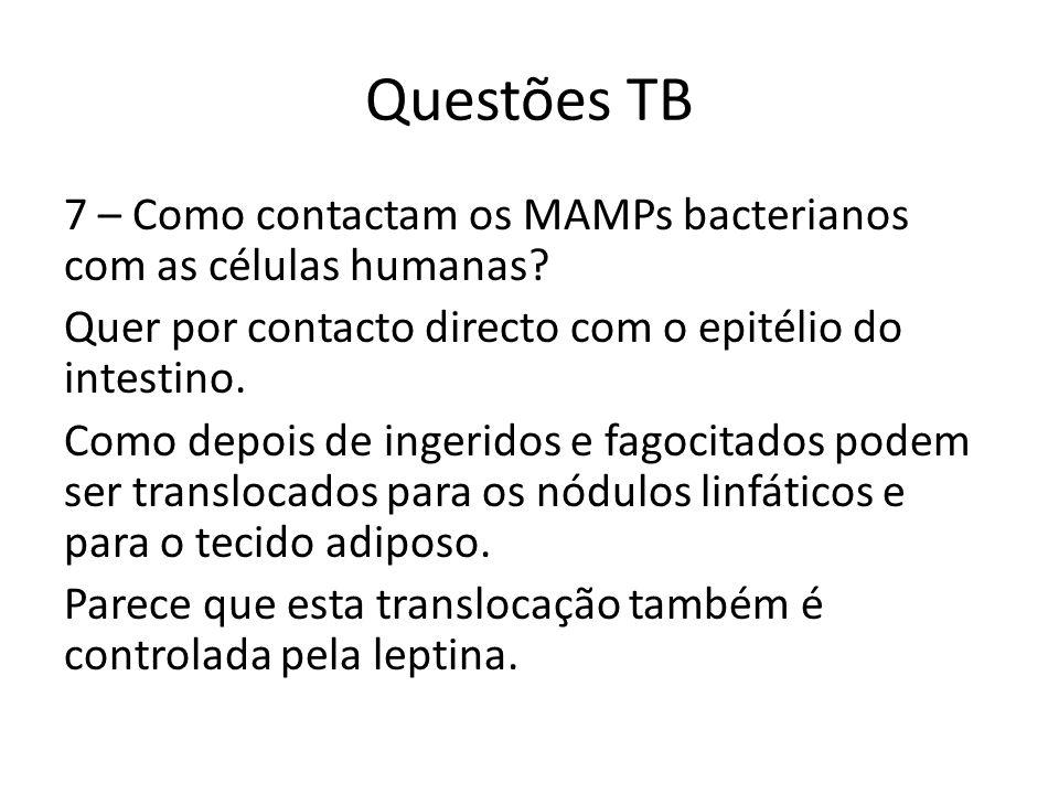 Questões TB 7 – Como contactam os MAMPs bacterianos com as células humanas? Quer por contacto directo com o epitélio do intestino. Como depois de inge