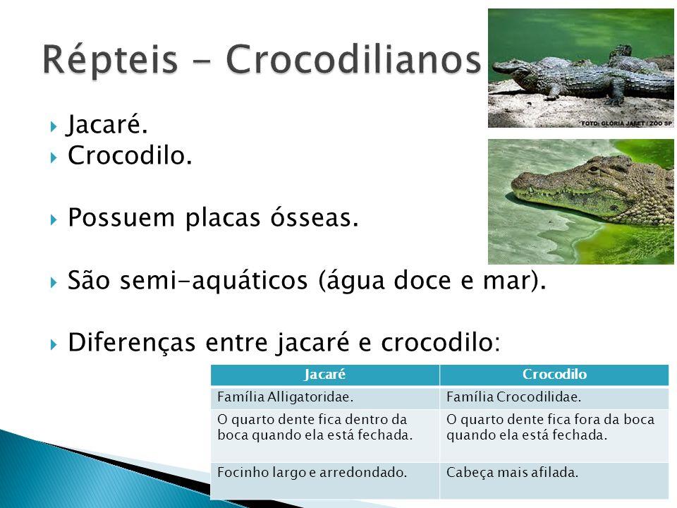 Jacaré. Crocodilo. Possuem placas ósseas. São semi-aquáticos (água doce e mar). Diferenças entre jacaré e crocodilo: JacaréCrocodilo Família Alligator