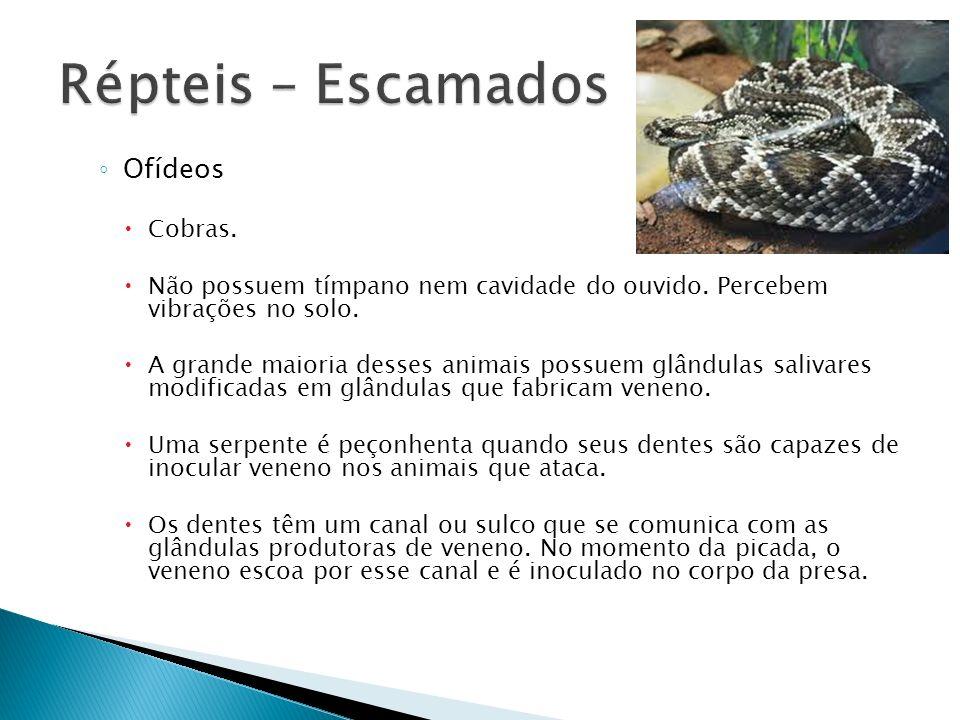 Ofídeos Cobras. Não possuem tímpano nem cavidade do ouvido. Percebem vibrações no solo. A grande maioria desses animais possuem glândulas salivares mo