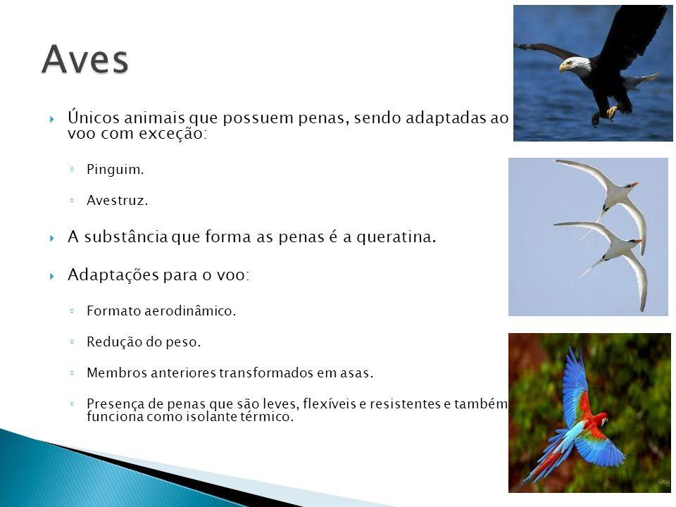 Únicos animais que possuem penas, sendo adaptadas ao voo com exceção: Pinguim. Avestruz. A substância que forma as penas é a queratina. Adaptações par