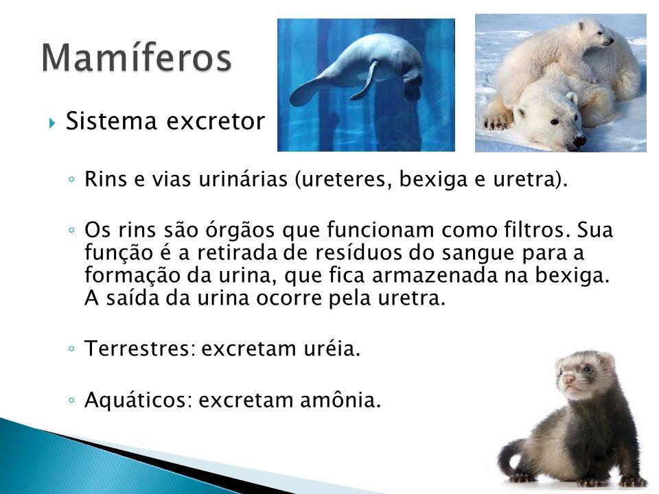 Sistema excretor Rins e vias urinárias (ureteres, bexiga e uretra). Os rins são órgãos que funcionam como filtros. Sua função é a retirada de resíduos