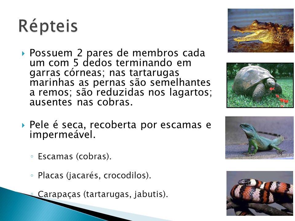Possuem 2 pares de membros cada um com 5 dedos terminando em garras córneas; nas tartarugas marinhas as pernas são semelhantes a remos; são reduzidas