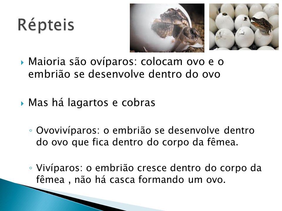 Maioria são ovíparos: colocam ovo e o embrião se desenvolve dentro do ovo Mas há lagartos e cobras Ovovivíparos: o embrião se desenvolve dentro do ovo