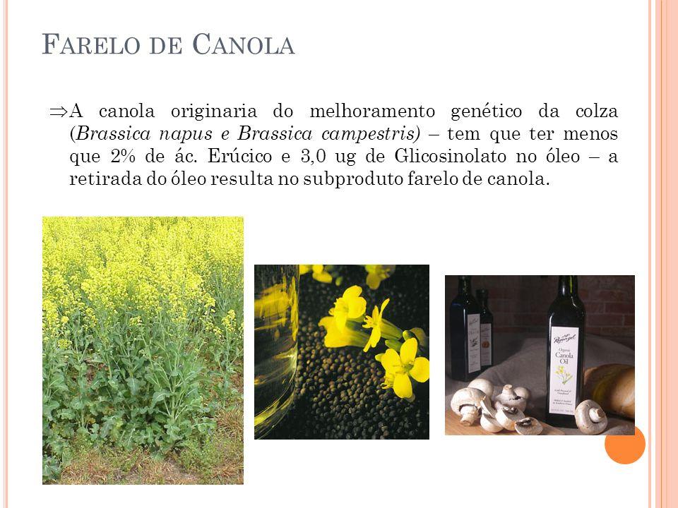 F ARELO DE C ANOLA A canola originaria do melhoramento genético da colza ( Brassica napus e Brassica campestris) – tem que ter menos que 2% de ác. Erú