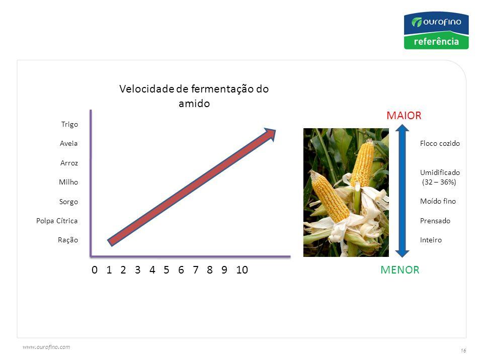 www.ourofino.com 16 Trigo Aveia Arroz Milho Sorgo Polpa Cítrica Ração 0 1 2 3 4 5 6 7 8 9 10 Velocidade de fermentação do amido Floco cozido Umidificado (32 – 36%) Moído fino Prensado Inteiro MAIOR MENOR