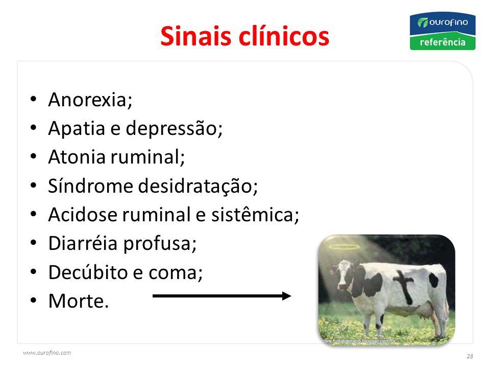 www.ourofino.com 28 Sinais clínicos Anorexia; Apatia e depressão; Atonia ruminal; Síndrome desidratação; Acidose ruminal e sistêmica; Diarréia profusa; Decúbito e coma; Morte.