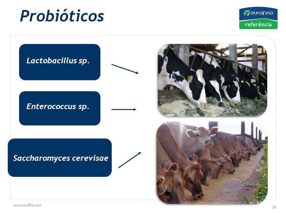 www.ourofino.com 36 Probióticos Lactobacillus sp. Enterococcus sp. Saccharomyces cerevisae