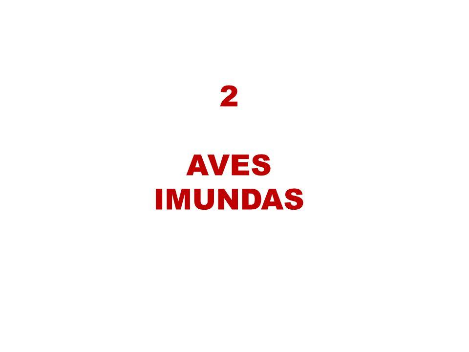 2 AVES IMUNDAS