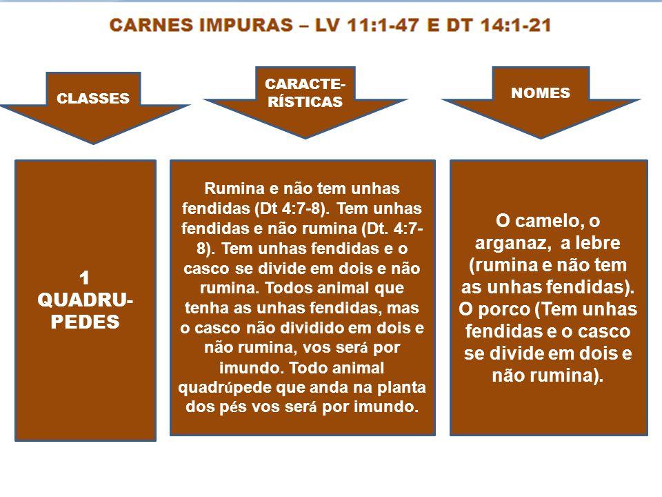 CLASSES CARACTE- RÍSTICAS NOMES 1 QUADRU- PEDES Rumina e não tem unhas fendidas (Dt 4:7-8). Tem unhas fendidas e não rumina (Dt. 4:7- 8). Tem unhas fe