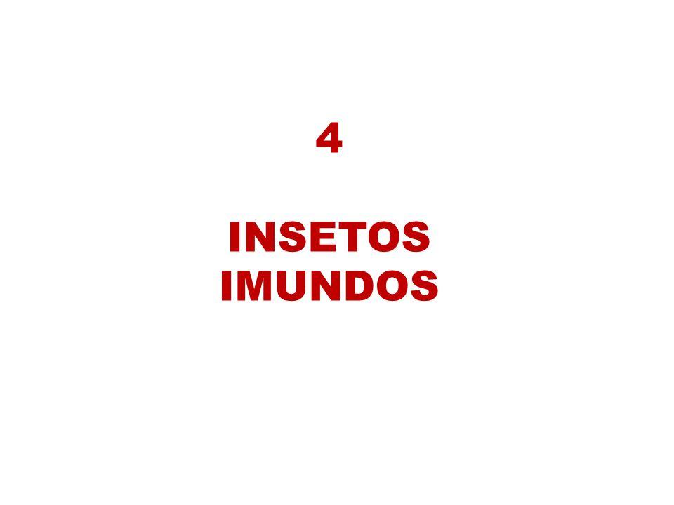 4 INSETOS IMUNDOS
