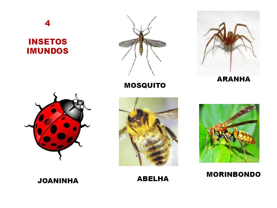 4 INSETOS IMUNDOS MOSQUITO ARANHA ABELHA MORINBONDO JOANINHA