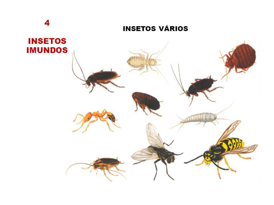 INSETOS VÁRIOS 4 INSETOS IMUNDOS