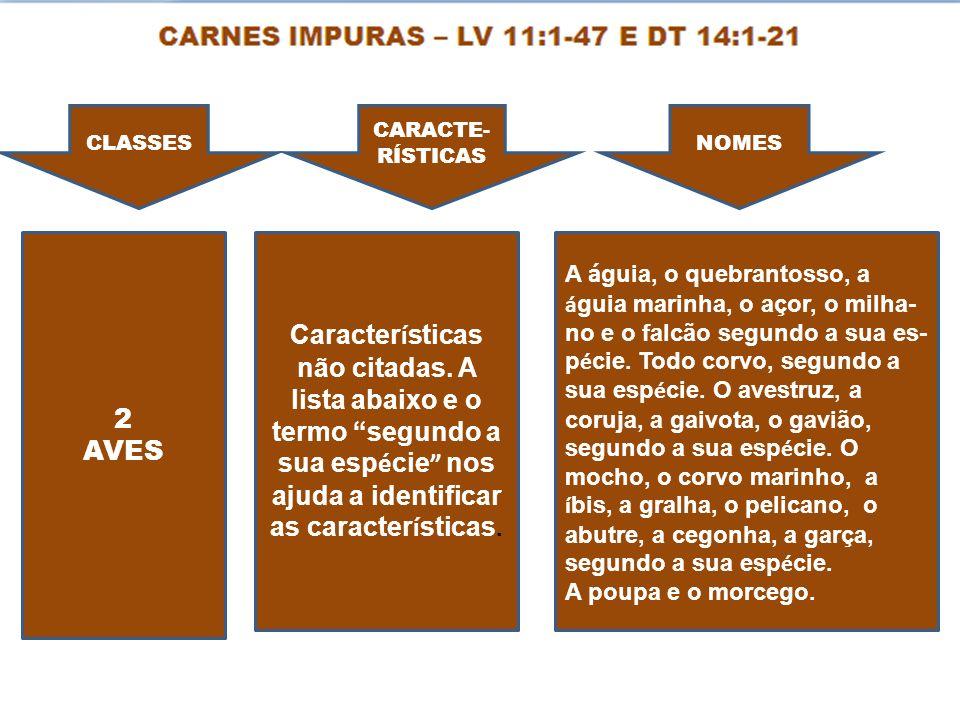 CLASSES CARACTE- RÍSTICAS NOMES 2 AVES Caracter í sticas não citadas. A lista abaixo e o termo segundo a sua esp é cie nos ajuda a identificar as cara