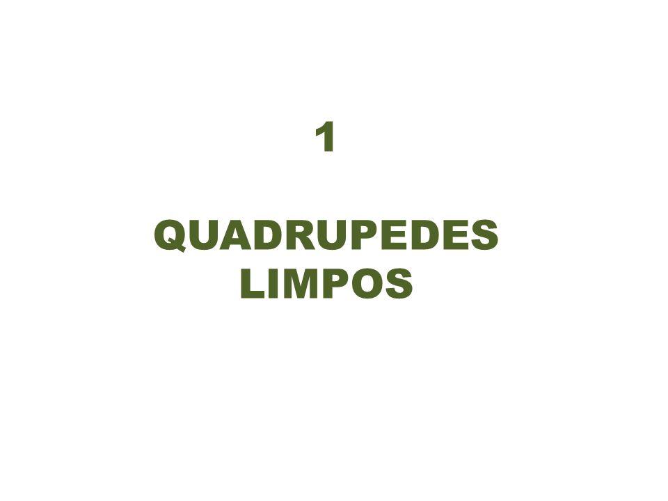 1 QUADRUPEDES LIMPOS