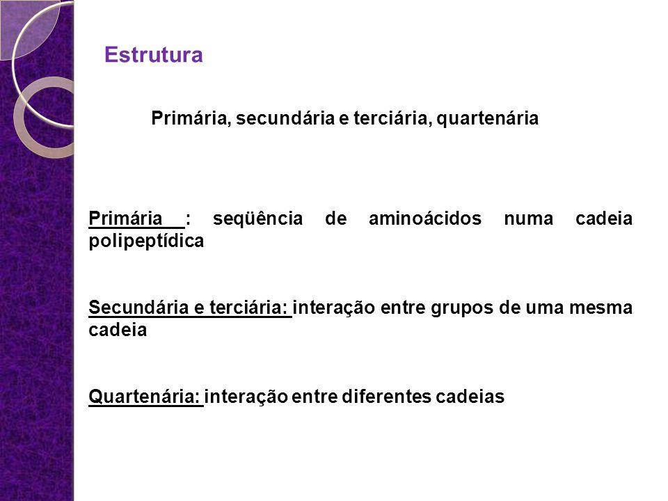 Estrutura Primária, secundária e terciária, quartenária Primária : seqüência de aminoácidos numa cadeia polipeptídica Secundária e terciária: interaçã