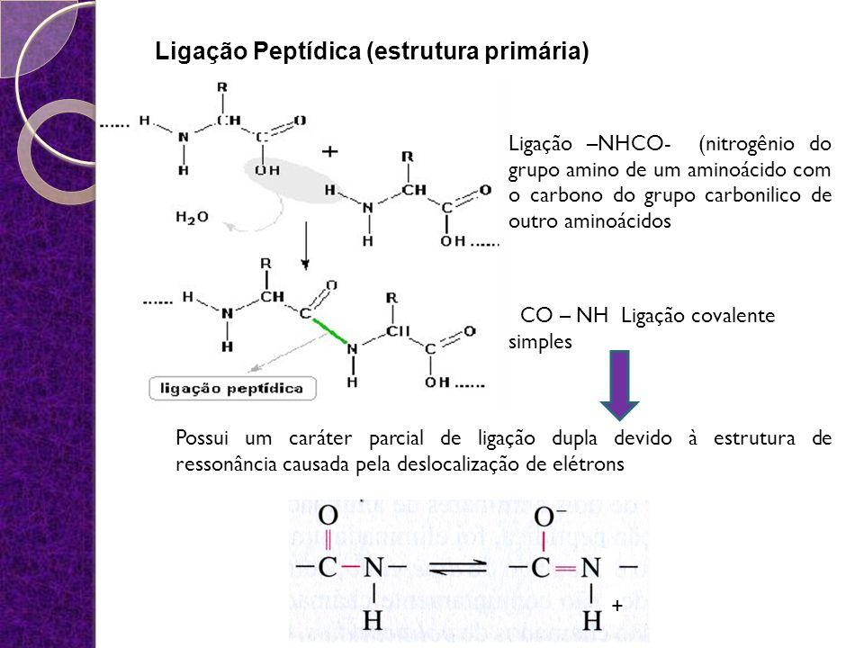 Ligação Peptídica (estrutura primária) Ligação –NHCO- (nitrogênio do grupo amino de um aminoácido com o carbono do grupo carbonilico de outro aminoáci