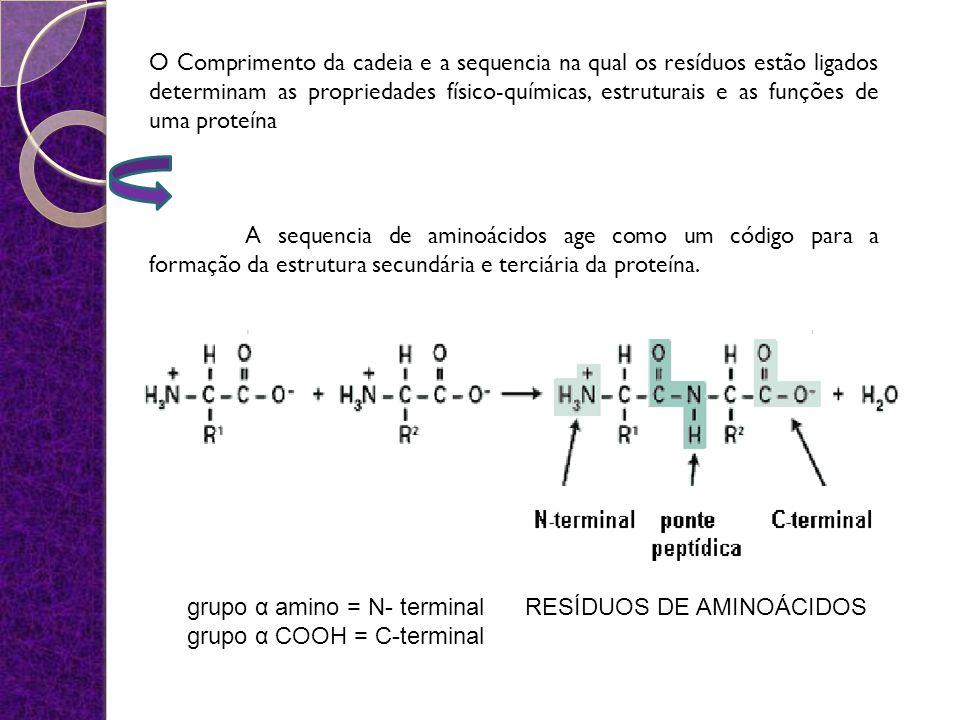 O Comprimento da cadeia e a sequencia na qual os resíduos estão ligados determinam as propriedades físico-químicas, estruturais e as funções de uma pr