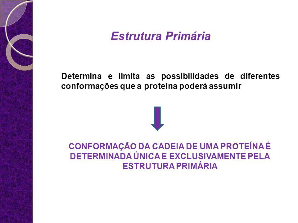 Estrutura Primária Determina e limita as possibilidades de diferentes conformações que a proteína poderá assumir CONFORMAÇÃO DA CADEIA DE UMA PROTEÍNA