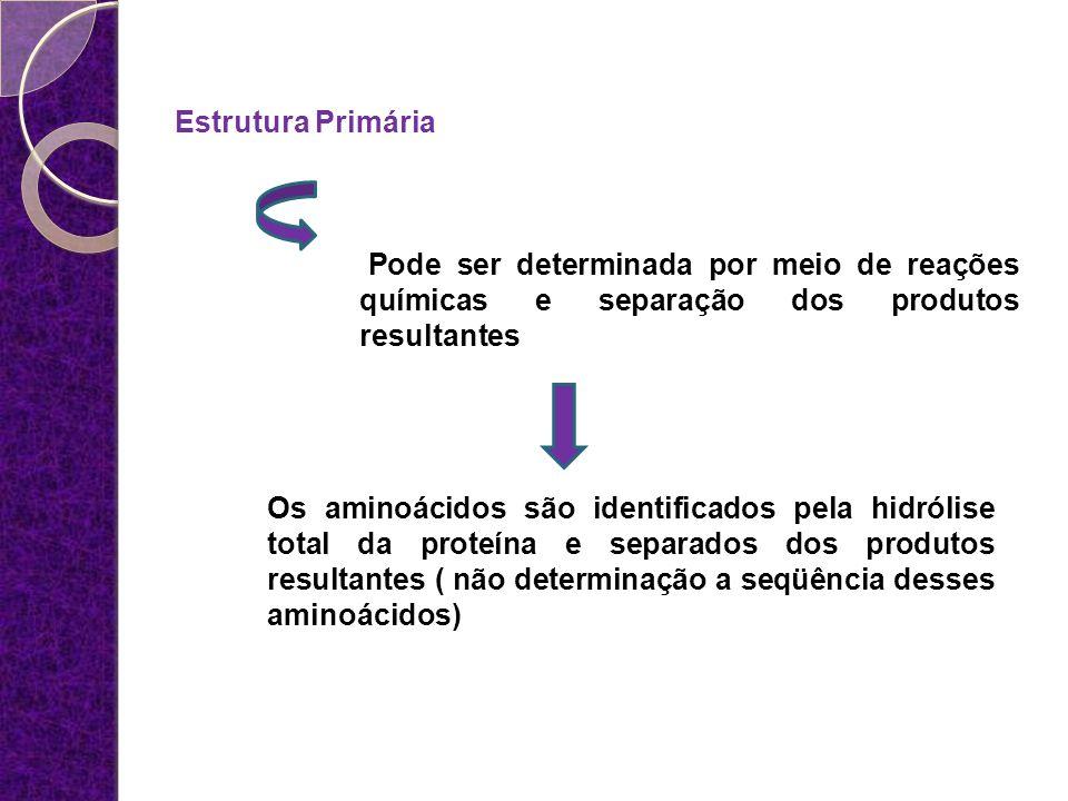 Estrutura Primária Pode ser determinada por meio de reações químicas e separação dos produtos resultantes Os aminoácidos são identificados pela hidról