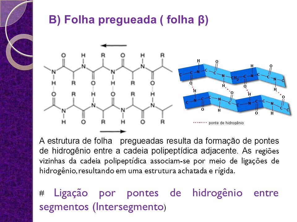 A estrutura de folha pregueadas resulta da formação de pontes de hidrogênio entre a cadeia polipeptídica adjacente. As regiões vizinhas da cadeia poli