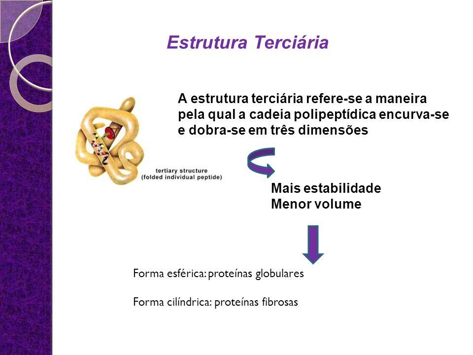 A estrutura terciária refere-se a maneira pela qual a cadeia polipeptídica encurva-se e dobra-se em três dimensões Mais estabilidade Menor volume Form