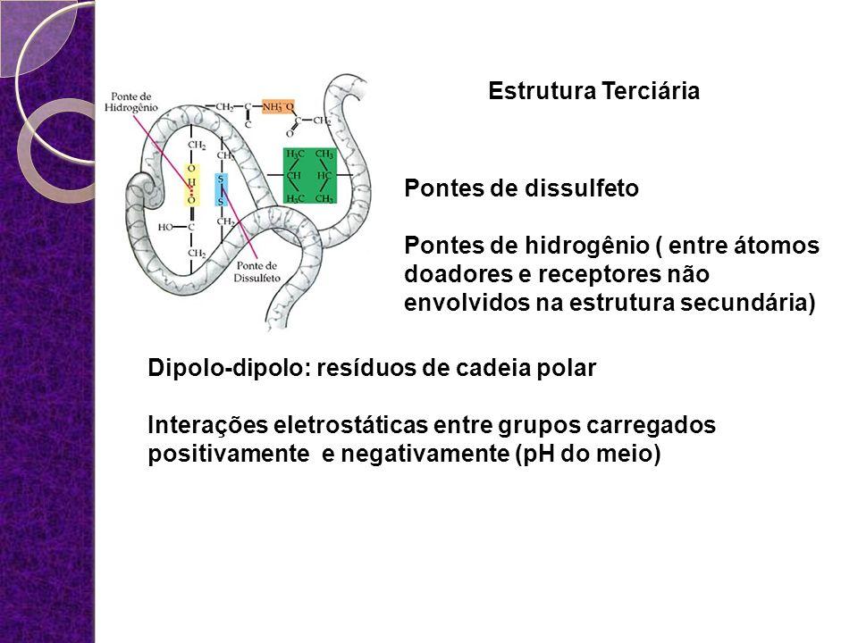 Estrutura Terciária Pontes de dissulfeto Pontes de hidrogênio ( entre átomos doadores e receptores não envolvidos na estrutura secundária) Dipolo-dipo