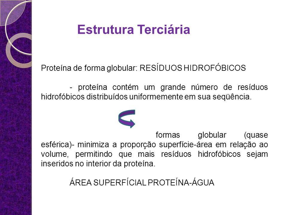 Estrutura Terciária Proteína de forma globular: RESÍDUOS HIDROFÓBICOS - proteína contém um grande número de resíduos hidrofóbicos distribuídos uniform