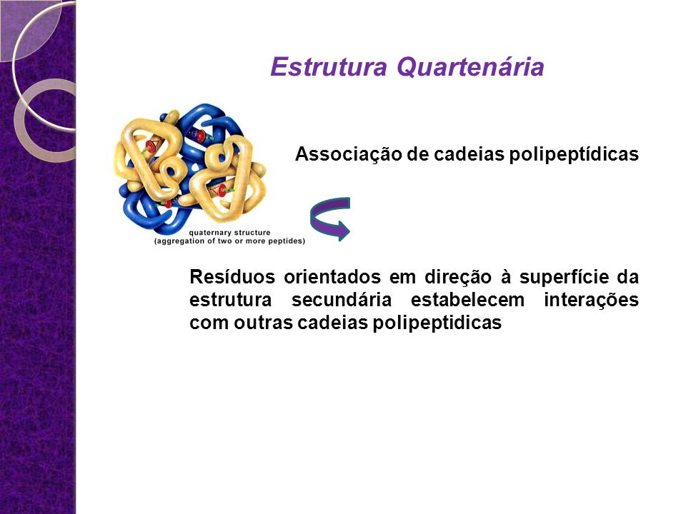 Associação de cadeias polipeptídicas Estrutura Quartenária Resíduos orientados em direção à superfície da estrutura secundária estabelecem interações
