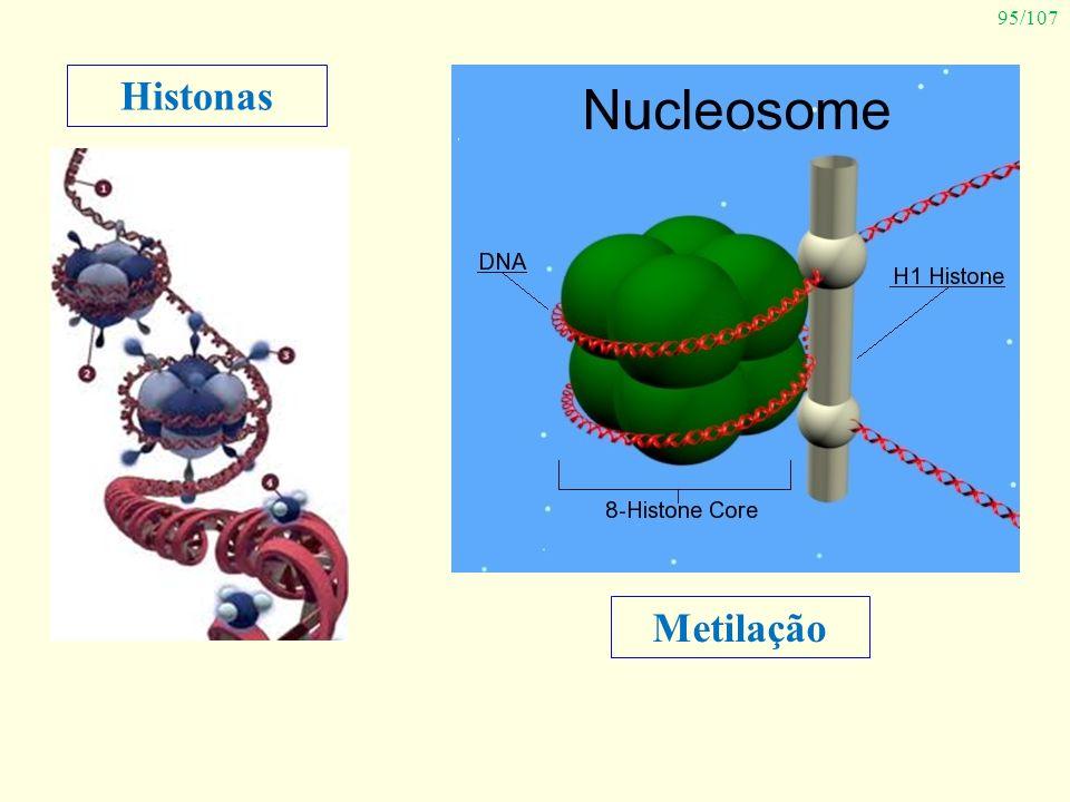 95/107 Histonas Metilação