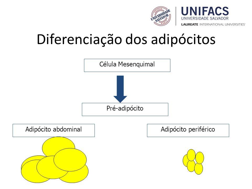 Diferenciação dos adipócitos Pré-adipócito Célula Mesenquimal Adipócito abdominalAdipócito periférico