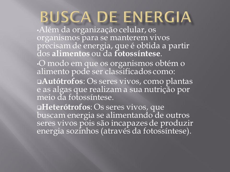 Além da organização celular, os organismos para se manterem vivos precisam de energia, que é obtida a partir dos alimentos ou da fotossíntese. O modo