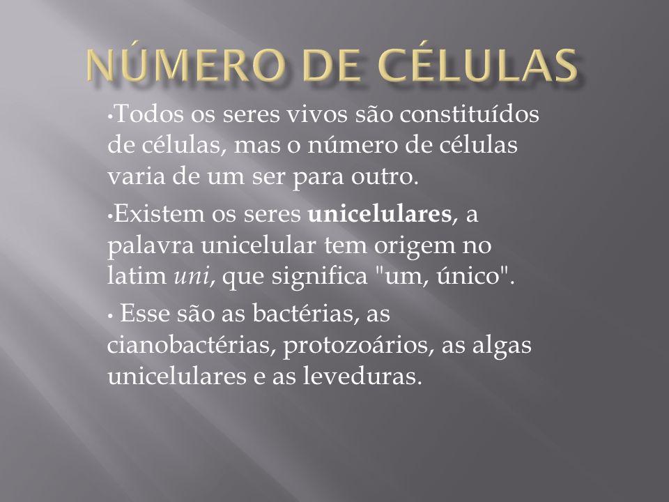Todos os seres vivos são constituídos de células, mas o número de células varia de um ser para outro. Existem os seres unicelulares, a palavra unicelu