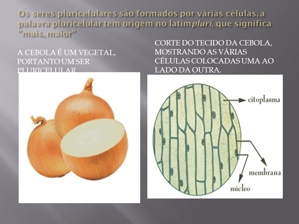 Os diferentes tipos de células podem ser classificadas em duas categorias quanto a sua organização do núcleo.