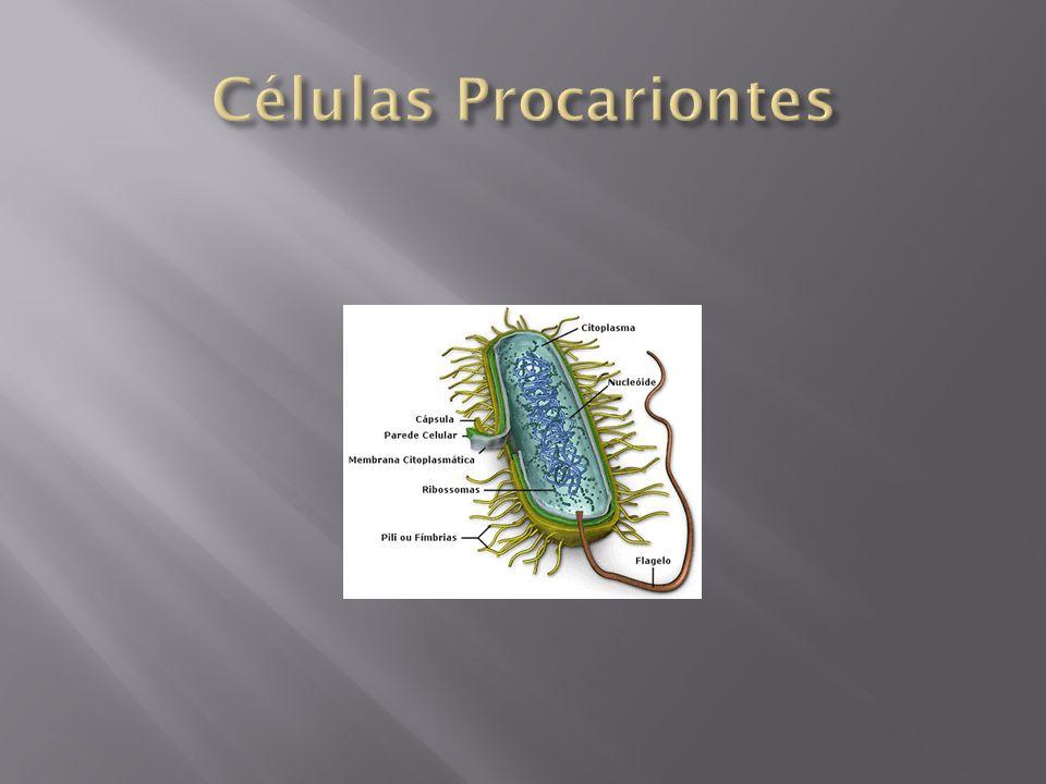 A reprodução assexuada não envolve estas etapas especiais, os gametas; depende apenas das células.