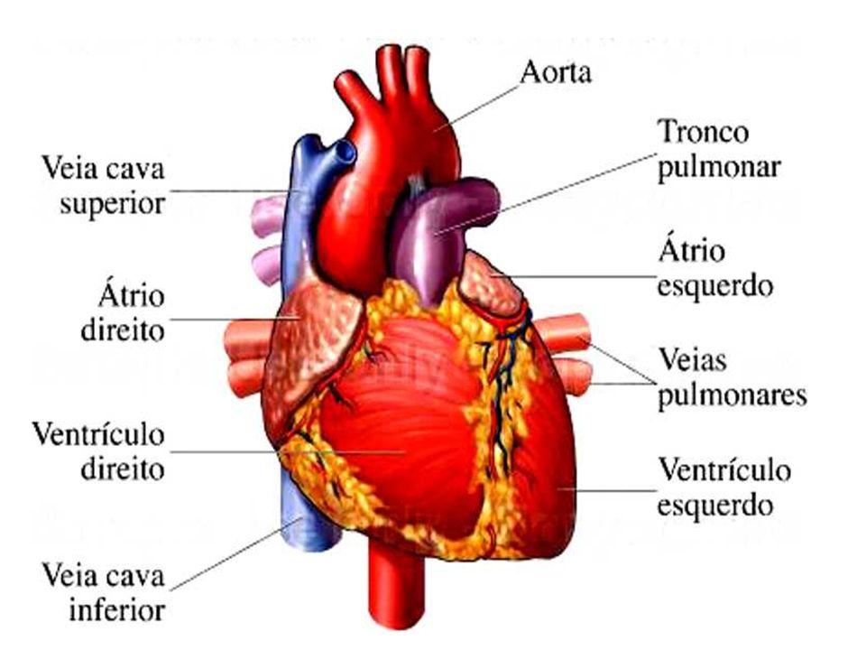 Síndromes coronarianas agudas A angina do peito ou angina pectoris, é uma dor ou desconforto transitório localizado na região anterior do tórax, sentido como uma sensação de pressão, aperto ou queimação.A angina do peito poderá ser chamada de estável e instável.