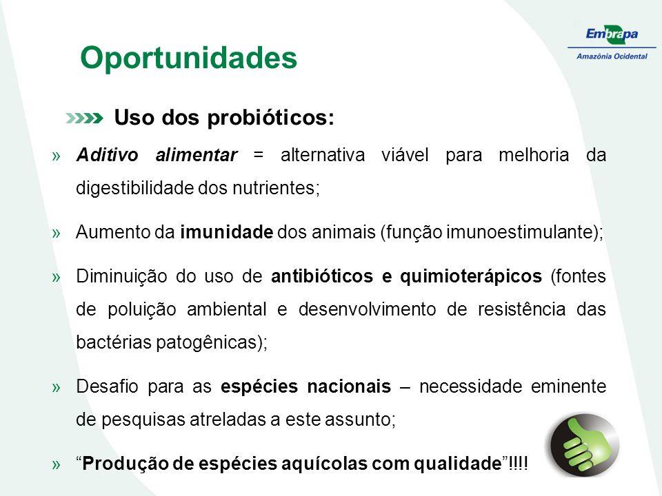 Oportunidades Uso dos probióticos: »Aditivo alimentar = alternativa viável para melhoria da digestibilidade dos nutrientes; »Aumento da imunidade dos