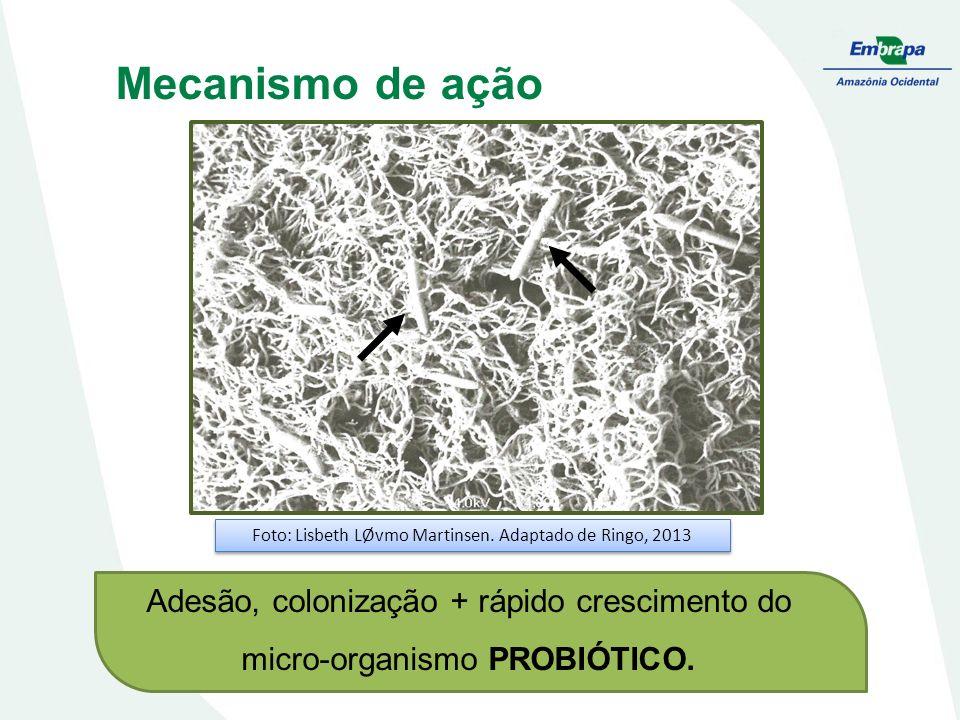 Mecanismo de ação Adesão, colonização + rápido crescimento do micro-organismo PROBIÓTICO. Foto: Lisbeth LØvmo Martinsen. Adaptado de Ringo, 2013