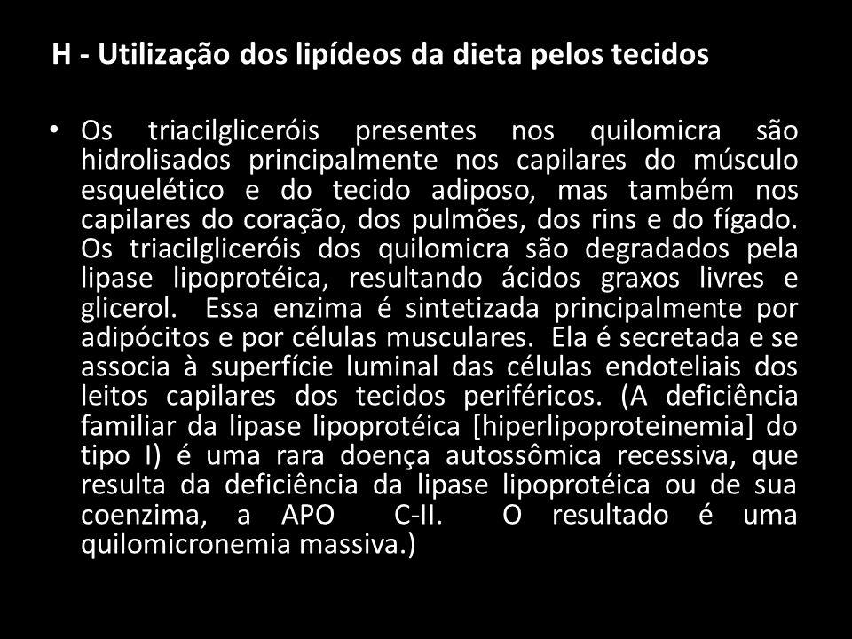 H - Utilização dos lipídeos da dieta pelos tecidos Os triacilgliceróis presentes nos quilomicra são hidrolisados principalmente nos capilares do múscu