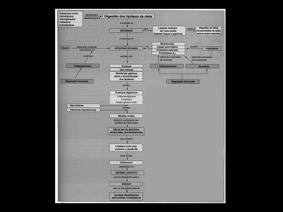 Metabolismo dos ácidos graxos e triacilgliceróis Os ácidos graxos existem no organismo na forma livre e também como moléculas mais complexas, tais como os triacilglicerol.