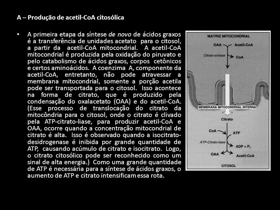 A – Produção de acetil-CoA citosólica A primeira etapa da síntese de novo de ácidos graxos é a transferência de unidades acetato para o citosol, a par